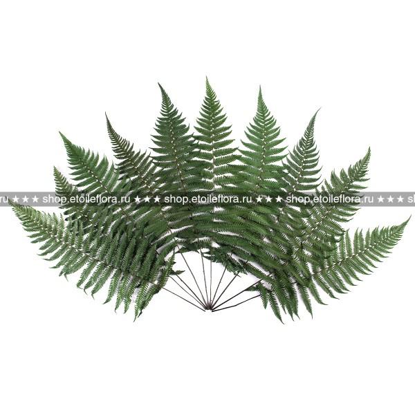 Папоротник Паршеман FPA/0102, ветви зеленые