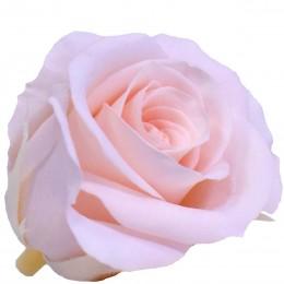 RME/0450 Роза Медеа гол. Навал винтажный розовый