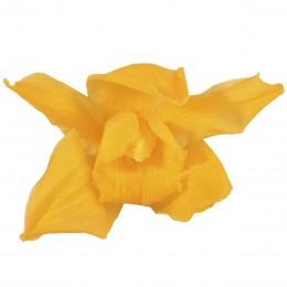 CYM/1351 Орхидея Цимбидиум 4 гол. желтый