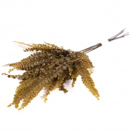 FFE/9113 Фельсия папоротник оливковый