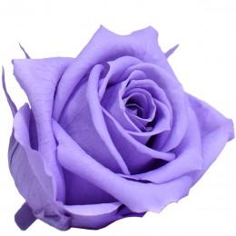 RME/0830 Роза Медеа гол. Навал лиловый
