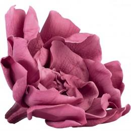GAR/1480 Гардения Цветок вишневый