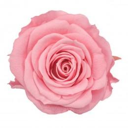 RME/3470 Роза Медеа 8гол. розовый светлый