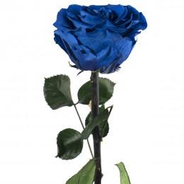PRZ/7630 Амороза Премиум в тубе 12 синий