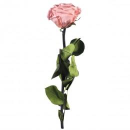 PRZ/2420 Амороза Мини в упак. 25 розовый