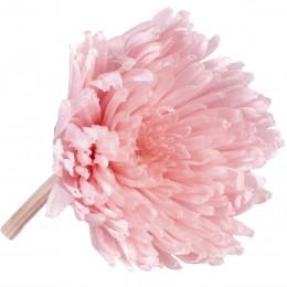 SHA/1420 Хризантема мал. плоская светло-розовый