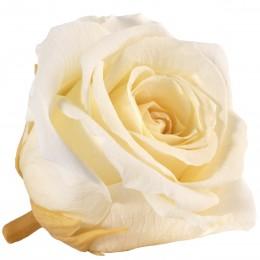 RME/3360 Роза Медеа 8гол. желтый