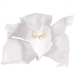 CYM/1000 Орхидея Цимбидиум 4 гол. белый