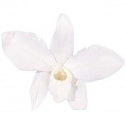 DEN/1000 Орхидея Дендробидиум 5 гол. белый