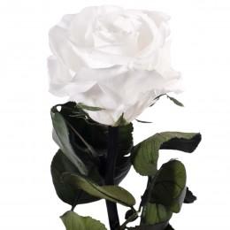 PRZ/2000 Амороза Мини в упак. 25 белый