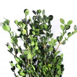 BXS/6103 Самшит ветви зеленый