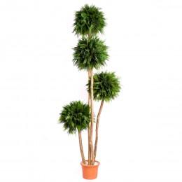 ABT/0118R Туя дерево 4 шар.