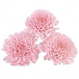 FOC/1420 Хризантема фокус светло-розовый