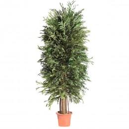 ANI/0124R Николи дерево ветвистое