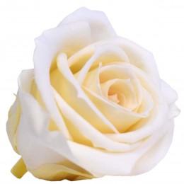 RME/0020 Роза Медеа гол. Навал шампанский