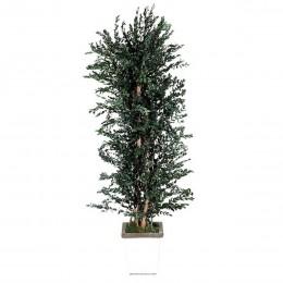 APA/0118 Парвафолия дерево ветвистое / 180 зеленый