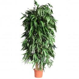 APE/0124R Пендула дерево ветвистое / 240