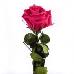 PRZ/2490 Амороза Мини в упак. 25 розовый