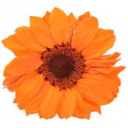 SUN/1530 Подсолнух (Гербера) оранжевый
