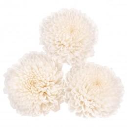 FOC/1000 Хризантема фокус белый