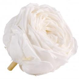 RGA/2000 Роза пионовидная белая 6 гол.