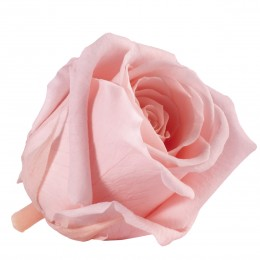 RME/3450 Роза Медеа 8гол. винтажный розовый