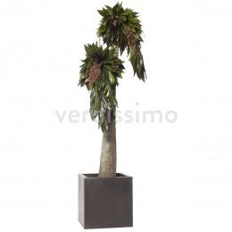 JCO/0119 Дерево Джумбо Империо 190см зеленый
