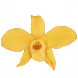 DEN/1350 Орхидея Дендробидиум 5 гол. желтый