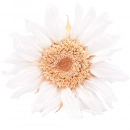 SUN/1000 Подсолнух (Гербера) белый