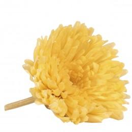 SHA/1320 Хризантема мал. плоская желтый